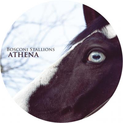 Various Artist - Bosconi Stallions  Athena